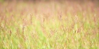 abstrakt sommar för bakgrundsnaturfjäder Royaltyfria Foton