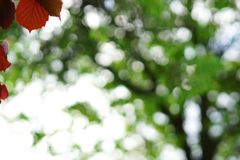 Abstrakt sommar höstbakgrund Royaltyfri Fotografi