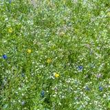 Abstrakt sommar som är naturlig, blomma Royaltyfri Bild
