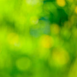 Abstrakt sommar tänder bakgrund Arkivfoto