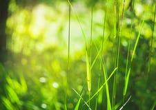 Abstrakt sommarbakgrund med gräs Arkivbilder