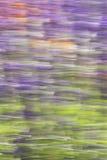 Abstrakt sommarnaturbakgrund - materielfoto Arkivbild