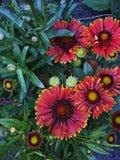 abstrakt spectrum för brandblommapetals Royaltyfri Fotografi