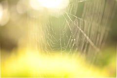 abstrakt spindelrengöringsduk Royaltyfri Fotografi