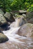 Abstrakt sten med vattenfallet och det härliga gröna bladet Royaltyfria Bilder