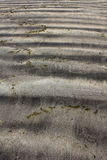Abstrakt strand Royaltyfri Fotografi