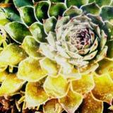 Abstrakt suckulent illustration Royaltyfria Bilder