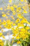 Abstrakt suddig bakgrund av den gula orkidén, Oncidium arkivfoton