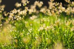 Abstrakt suddig bakgrund av nya gröna gräs stänger sig upp på b Royaltyfri Fotografi
