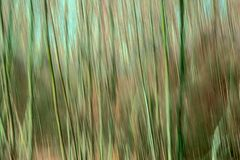 Abstrakt suddig bakgrund för rörelse med vertikala linjer i gröna och bruna toner royaltyfria foton