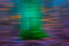 Abstrakt suddig bakgrund för skog Royaltyfri Foto