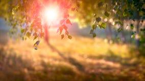 Abstrakt suddig bakgrundssol för sommar Royaltyfri Fotografi