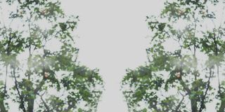 Abstrakt suddig bild av grön lövverkbakgrund royaltyfri bild