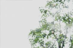 Abstrakt suddig bild av grön lövverkbakgrund royaltyfri fotografi