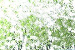 Abstrakt suddig bild av grön lövverkbakgrund fotografering för bildbyråer