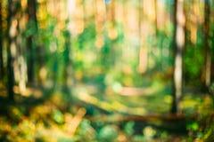 Abstrakt suddig Bokeh bakgrund med sommar Royaltyfri Foto