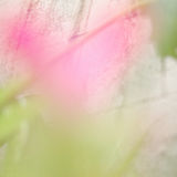 Abstrakt suddig naturbakgrund arkivfoto