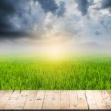 Abstrakt suddig risfält- och trätabell Royaltyfria Foton