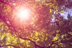 Abstrakt suddig skogbakgrund för sommar Royaltyfri Foto