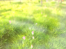 Abstrakt suddighet: fjädra gräs, och rosa färger blommar med grön natur b Royaltyfri Foto