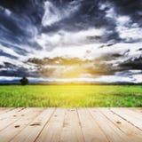 Abstrakt suddigt fält och solljus Fotografering för Bildbyråer