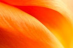 Abstrakt supermacrobild av den trädgårds- tulpan Royaltyfria Bilder