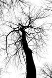 abstrakt svart kuslig treewhite Fotografering för Bildbyråer