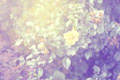 Abstrakt tappningbakgrund Royaltyfria Foton