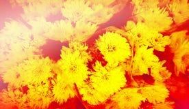 Abstrakt tappningsignal av blommor Arkivfoton