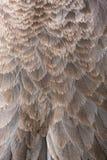 Abstrakt textur av brunt och Tan Feathers på fågel Arkivbild