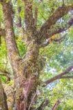 Abstrakt textur av den gröna trädstammen med mossig bakgrund Royaltyfria Bilder