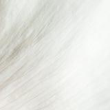 Abstrakt textur av den vita kronbladcloseupen Arkivbilder