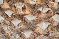 Abstrakt textur av en closeup för palmträdskäll Fotografering för Bildbyråer