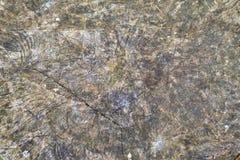 Abstrakt textur av en gammal sprucken stubbe Arkivfoton