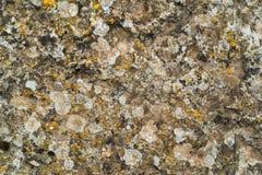 Abstrakt textur av en sten och en vegetation Royaltyfria Foton