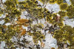 Abstrakt textur av en sten och en vegetation Arkivbild