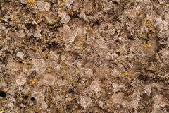 Abstrakt textur av en sten och en vegetation Royaltyfri Foto
