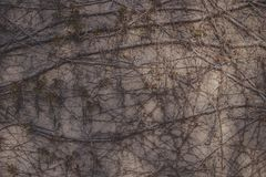 Abstrakt textur av en trädfilial krullade över en sten, backgroun Arkivbild