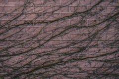 Abstrakt textur av en trädfilial krullade över en sten, backgroun Royaltyfri Bild