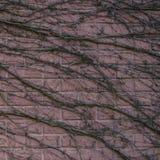 Abstrakt textur av en trädfilial krullade över en sten, backgroun Royaltyfri Fotografi