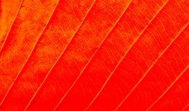 Abstrakt textur av makrosikten av bladtextur Arkivfoton