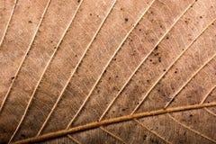 Abstrakt textur av makrosikten av bladtextur Royaltyfri Bild