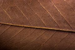 Abstrakt textur av makrosikten av bladtextur Fotografering för Bildbyråer