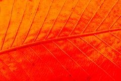 Abstrakt textur av makrosikten av bladtextur Arkivbild