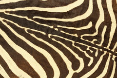 Abstrakt textur av sebrapäls Royaltyfria Foton