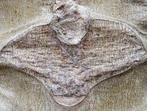 Abstrakt textur av slutet upp den papayaknoppen och stammen Arkivbild