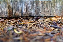 Abstrakt textur av snittträdcloseupen Royaltyfri Bild
