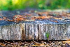 Abstrakt textur av snittträdcloseupen Royaltyfria Bilder