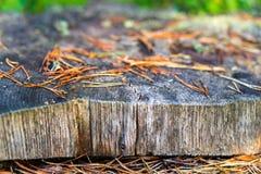Abstrakt textur av snittträdcloseupen Arkivbild