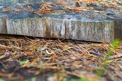 Abstrakt textur av snittträdcloseupen Royaltyfria Foton